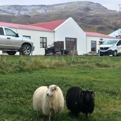 En uno de los campings funcionaba una granja. ¡Teníamos los mejores vecinos!